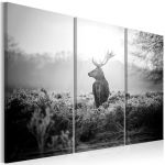 Obraz - Black and White Deer I