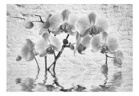 Fototapeta - Orchid in Shades of Gray