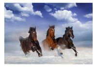 Fototapeta - Horses in the Snow
